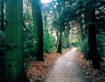 The Sand-walk or Thinking Path, 2003, Down House, Kent. Photograph: Shirley Chubb by kind permission of English Heritage